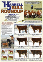 Harrell Bull Roundup 2008 catalog cover. Click to view PDF of catalogue.